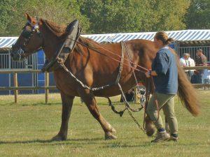 reproduccion equinos ganaderia