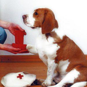 primeros auxilios unab
