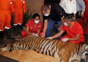 rehabilitación fauna silvestre unab